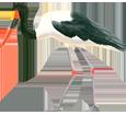 Jabiru ##STADE## - plumages 34