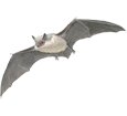 Bat ##STADE## - plumages 69
